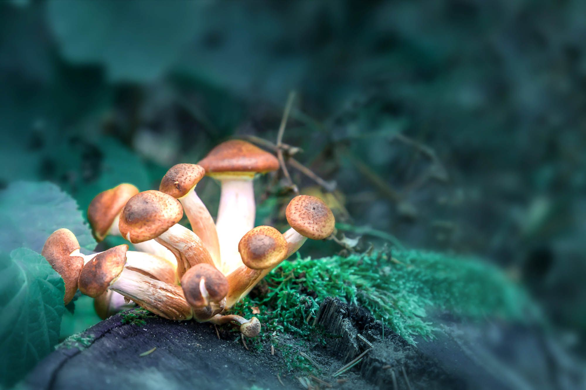The World Of Psychedelic Mushrooms Online-Hopes&Fears
